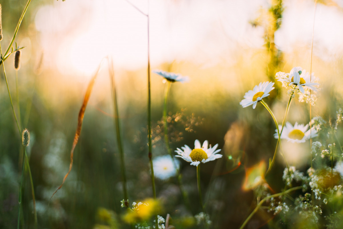 Spring Self Care